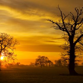 A Norfolk Sunrise. Lovely image of winter trees silhouetted against the morning sun