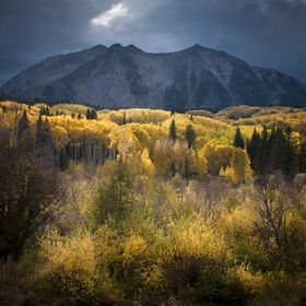 The sun lights up the fall colors before Mt Beckwith at Kebler Pass in Western Colorado.