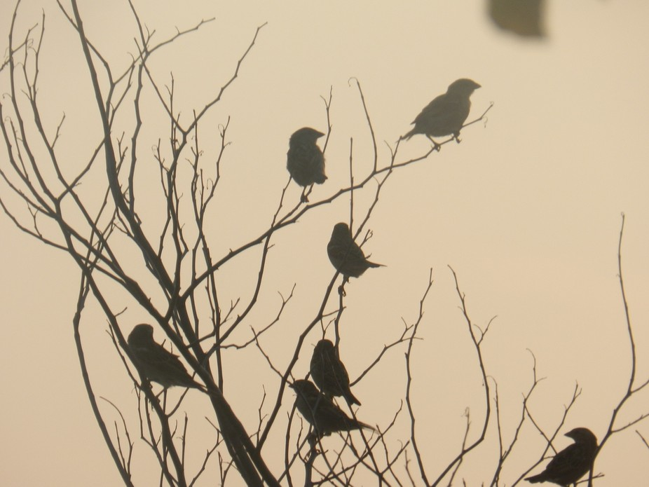 Birds on the bare tree branches