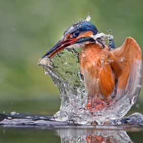 Another from my Kingfisher series