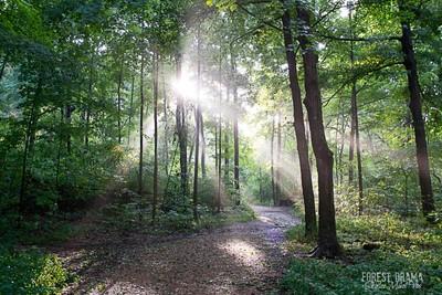 FOREST DRAMA