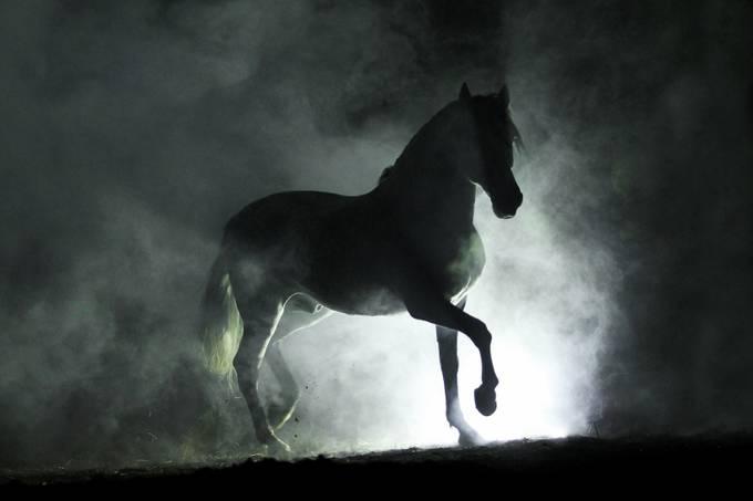 Baroque shadow by katarzynaokrzesik - Dusty Photo Contest