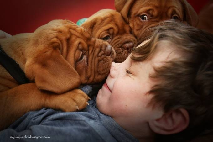 puppy love... by imagesbystephendavis - Children and Animals Photo Contest