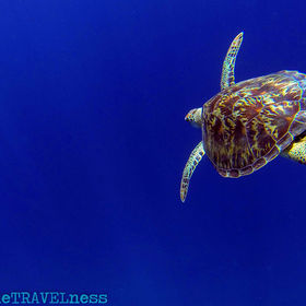 Sea Turtle Flying in the sky of the open ocean...