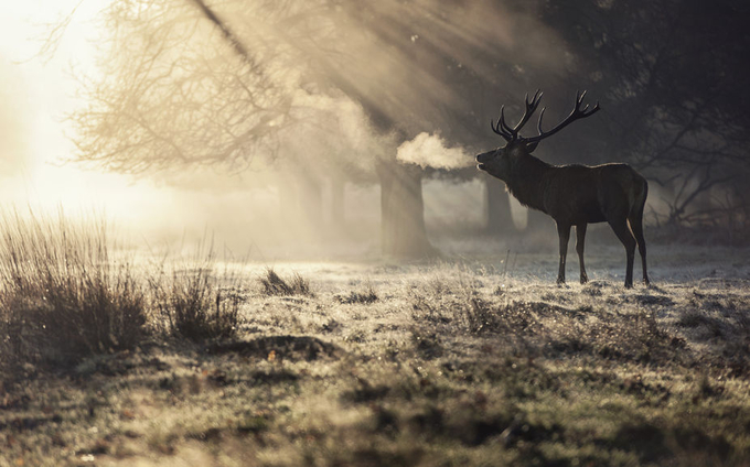 Richmond Park by mattjharris - Winter Landscapes Photo Contest