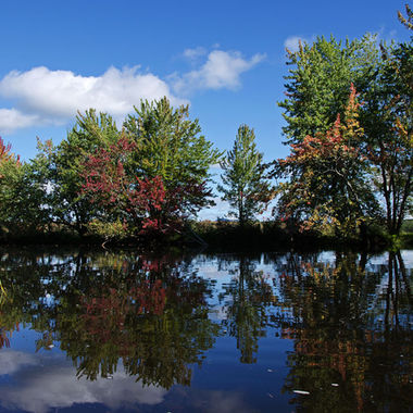 A group of colourful trees seen from a calm river.