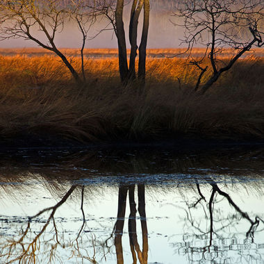 A bare tree and its reflection in the waters of a calm marsh.
