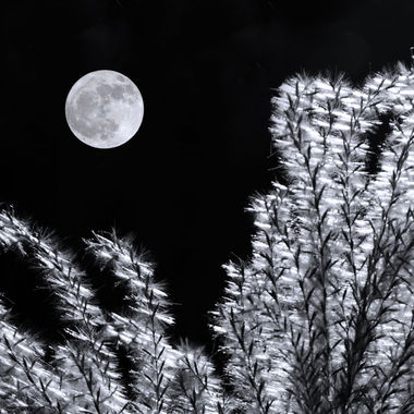 The full moon with fountain grass in the foreground.