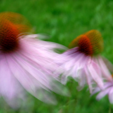 A group of coneflowers blowing in the wind, with motion blur.