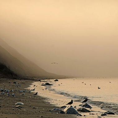 A gull covered coastline on a foggy morning.