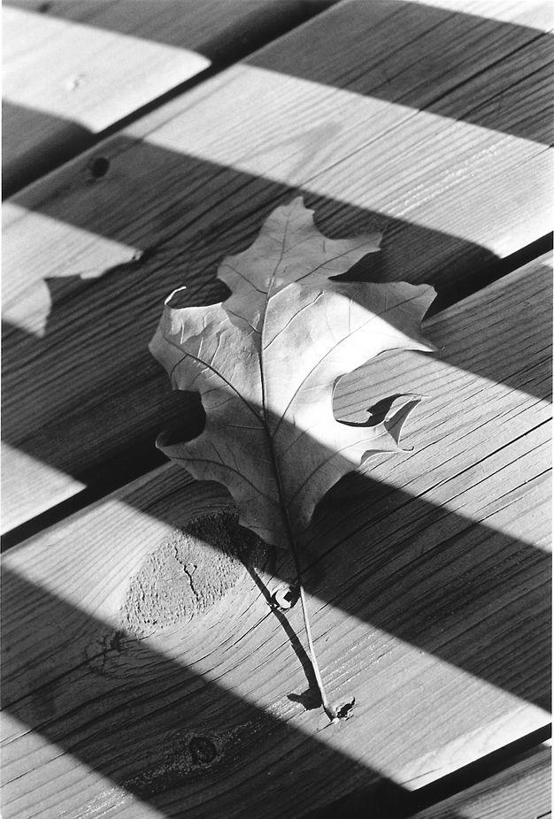 leaf fixed