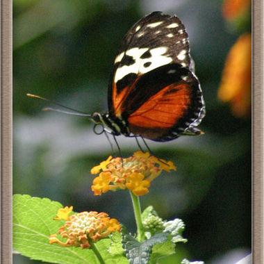 butterfly_net_061