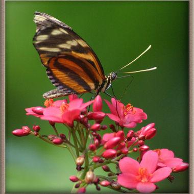 butterfly_net_078cc