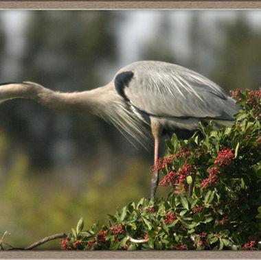 birdnet153