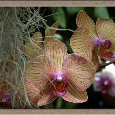 flowerglass14