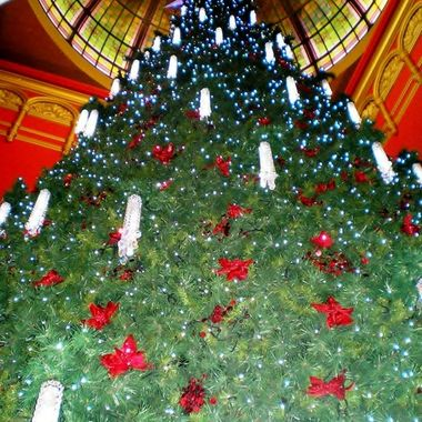 Oh Christmas Tree - Queen Victoria Building