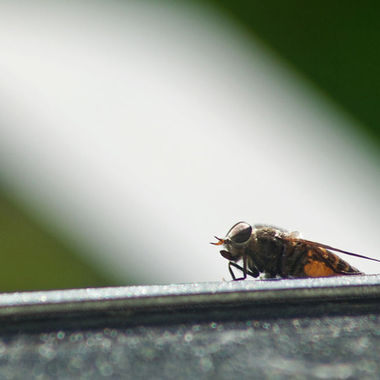 A close-up of horsefly on a patio table.