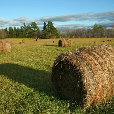 Bales of hay in a roadside field on a sunny fall afternoon.