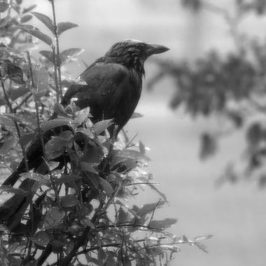 A crow sitting on a branch in the rain.