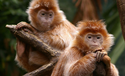 Watching you Monkey