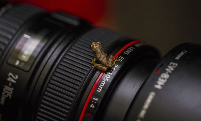 Baby Frog Lens Hopping by klukowski - Commercial Style Photo Contest