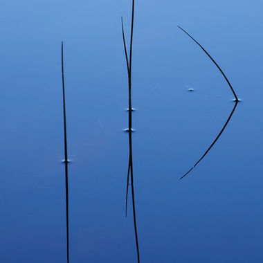 Close-up of blades of river grass and their reflections in calm water.