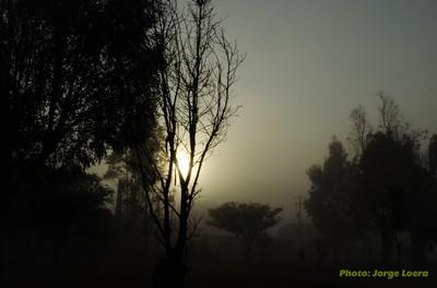 Magic Fog2