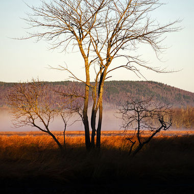 A bare tree and its reflection in the calm water of a marsh at daybreak.