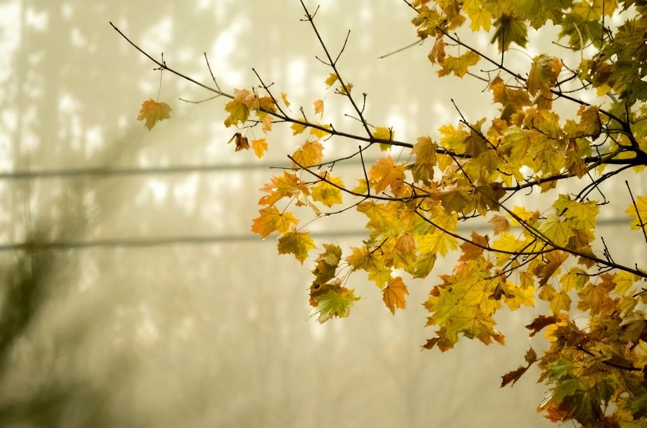 Fall Season <3
