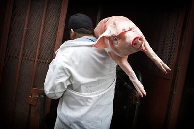 Pork Delivery