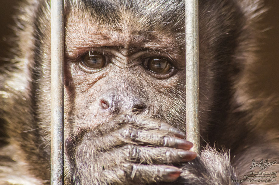 One of my favorite animal photos so far!   Capuchin Money from The Little Ponderosa Zoo! Check Th...