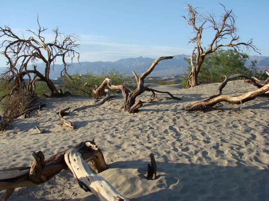Death Valley 2013 242 (2)