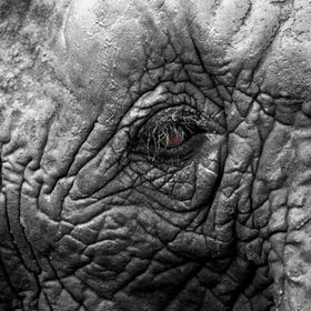 A closeup shot of a young elephant at Knysna elephant park