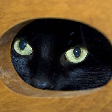 Our cat Coco looking through the hole in the backrest of  a wooden chair.