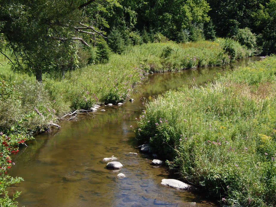 Hiking through a heavily wooded area, we were surprised the find this beautiful quiet creek.