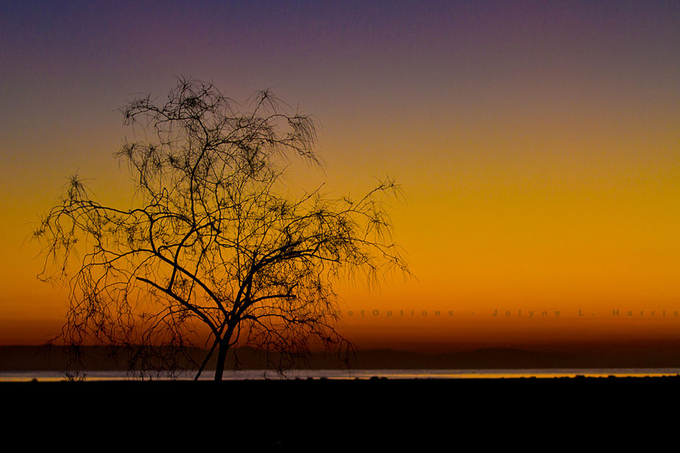 IMG_0895-2-c by JolyneH - A Lonely Tree Photo Contest