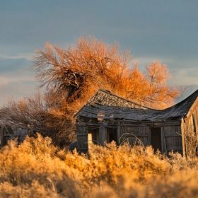 This old ranch house is showing the signs of age as it sits alone and overgrown by brush in ranch country of northern California.