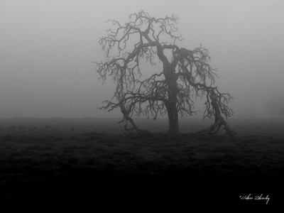 Foggy Morning....