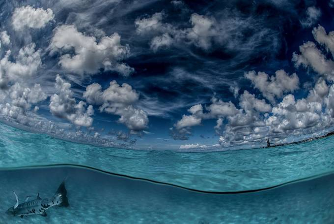 The two worlds and the Barracuda by LorenzoMittiga - The Ocean Photo Contest