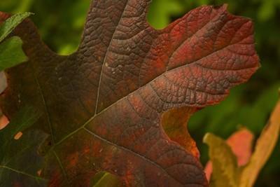 Leaf Texture Fall