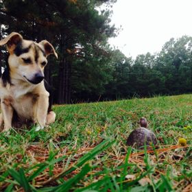 This is Dog, my dog, and Bologna, the box turtle, meeting for the first time. This little turtle was rescued from the middle of the road. We brou...