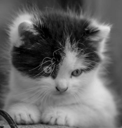 kitty2BaW
