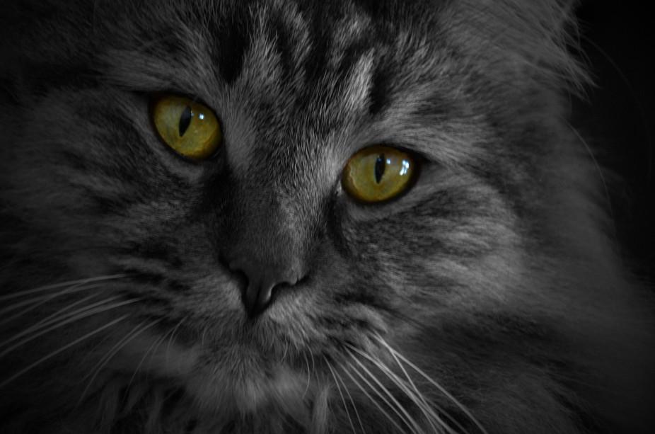 My Friends 22 pound cat named T-Bone.
