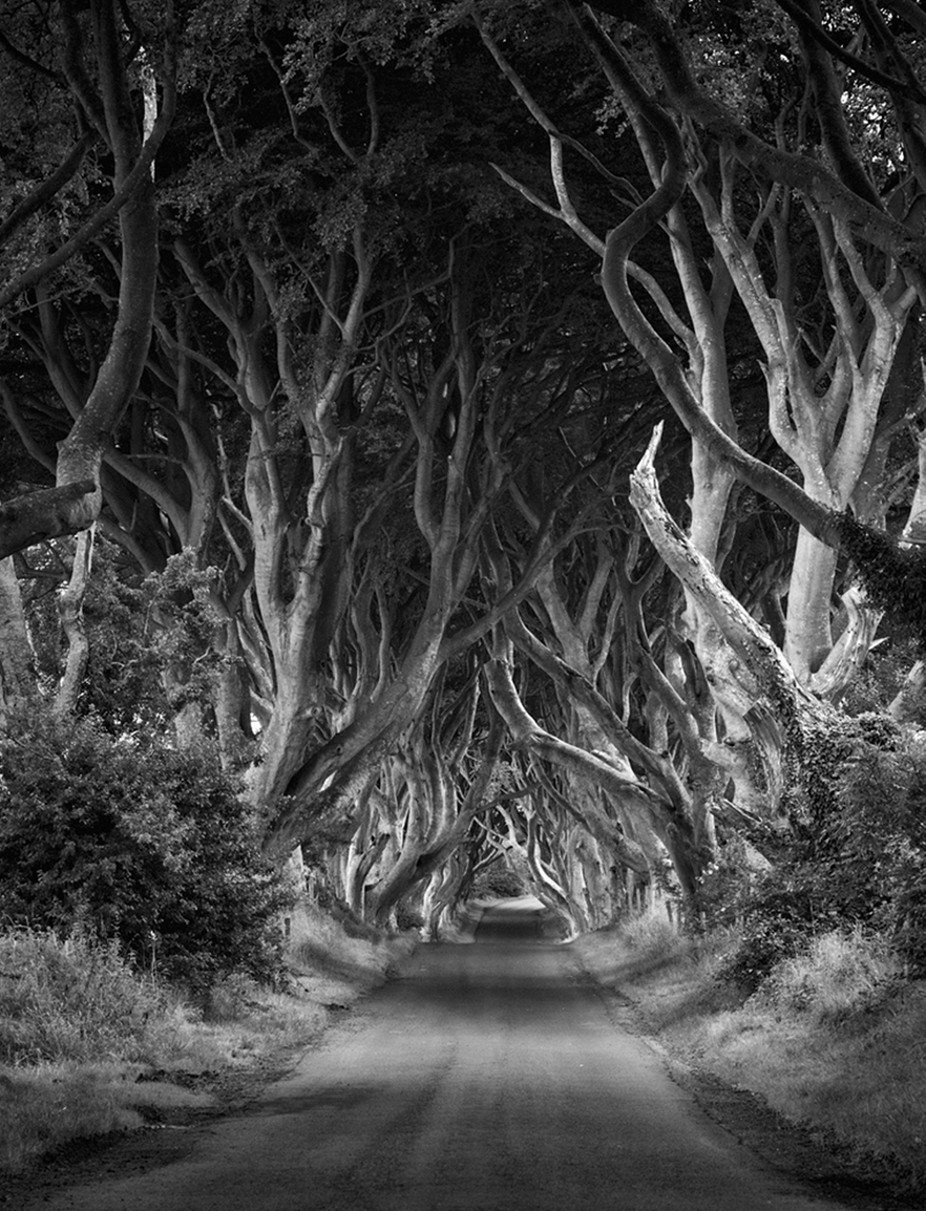 Dark Hedges by eileenmc - Depth In Black And White Photo Contest