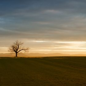 Tree having the vast fields all to itself.