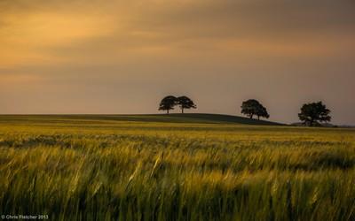 Late evening amongst the grass
