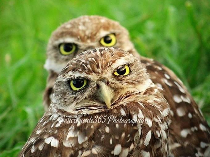 Doble owls by lamonamelba - Beautiful Owls Photo Contest