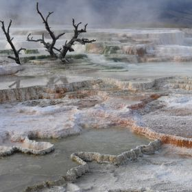 Geyser Basin in Yellowstone National Park