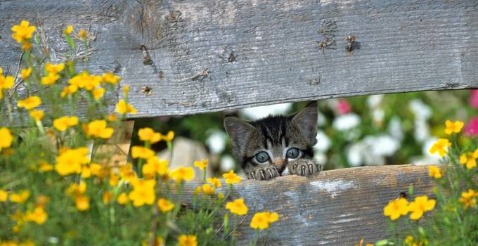CHATON by ANVI - Cute Kittens Photo Contest