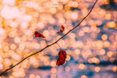 Autumn Remnants 3885_13